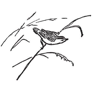 Bird on a cane