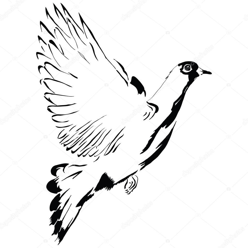 Dibujos Palomas Volando Dibujos Animados De Paloma Volando
