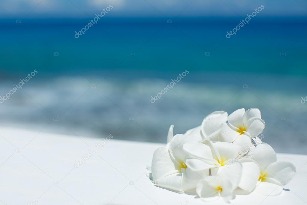 Tropical jasmine flowers (Plumeria)
