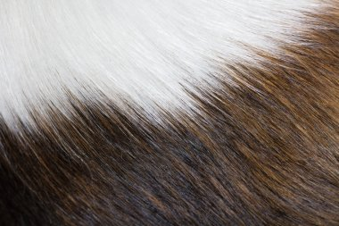 Texture of dog fur
