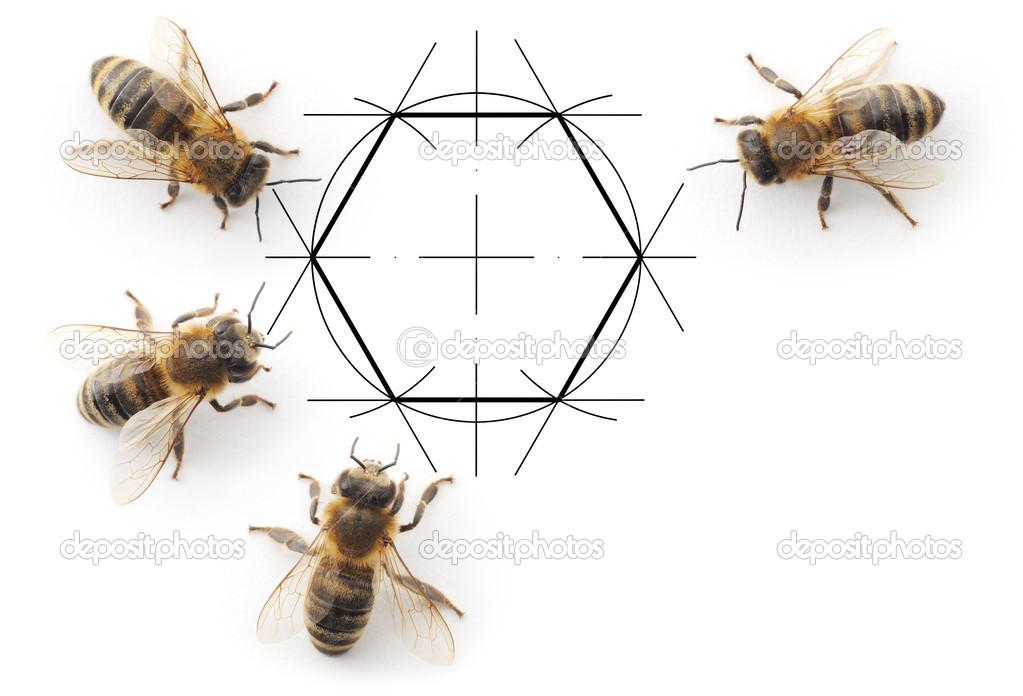 bees and drawing honeycombs