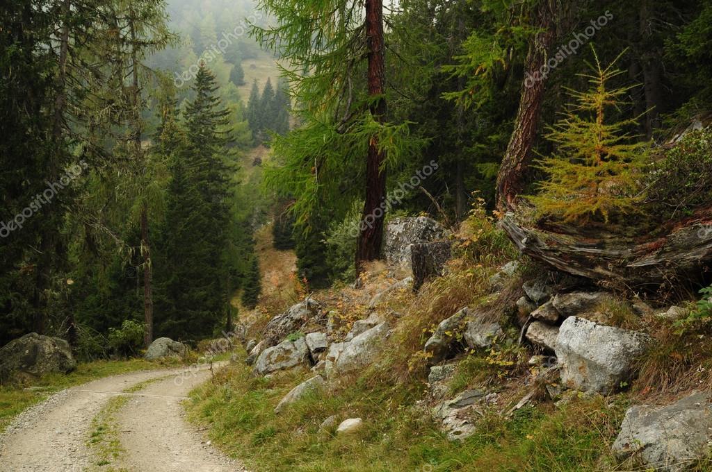 Фотообои Beautiful forest