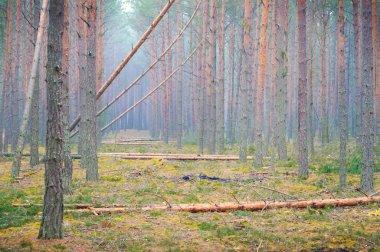 Rainforest deforestation in Ukraine.