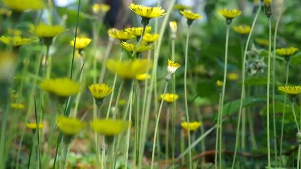 Krásné žluté květy