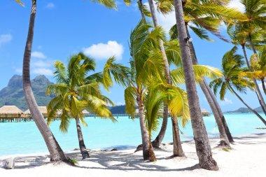 Palms at a tropical beach