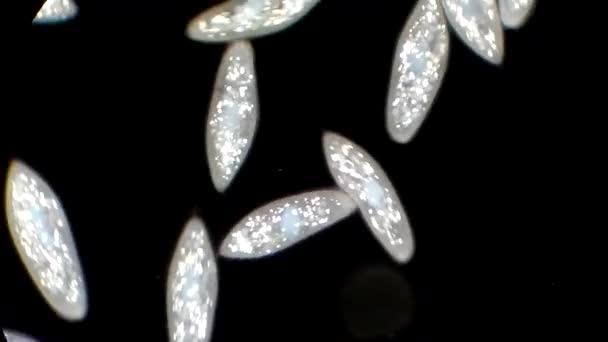 Infusorien unter mikroskop u stockvideo dimarion