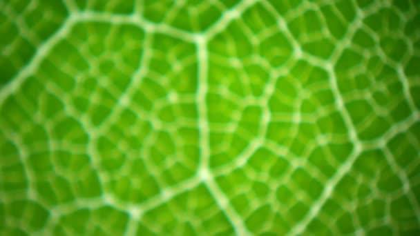 listy pod mikroskopem