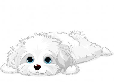 A cute white Havanese puppy laying down clip art vector