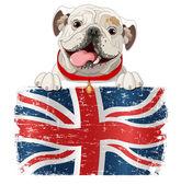 Englische Bulldogge über britische Flagge