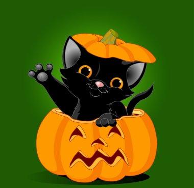 Black kitten jumping out of pumpkin