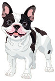Photo French bulldog