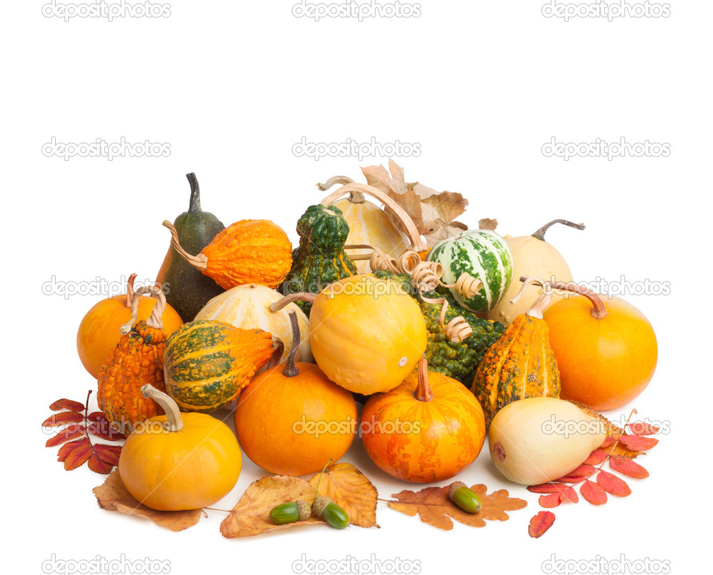 Pile of pumpkins with autumn foliage isolated on white backgroun