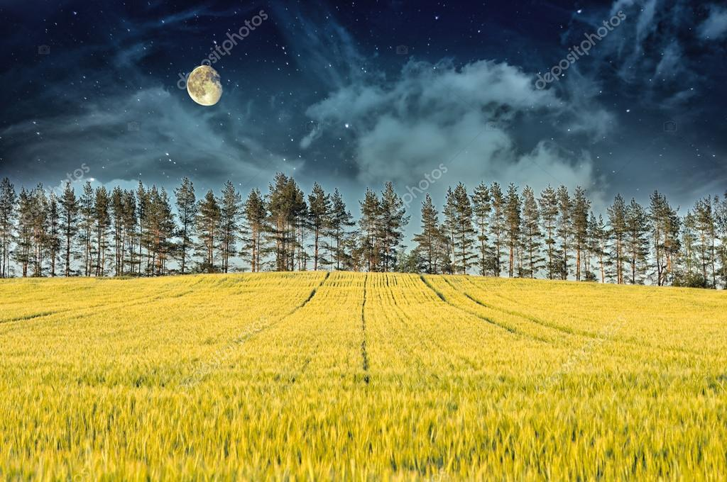 Mysterious Landscape – Yellow Field, Pine Trees, Moon and Dark Night Sky