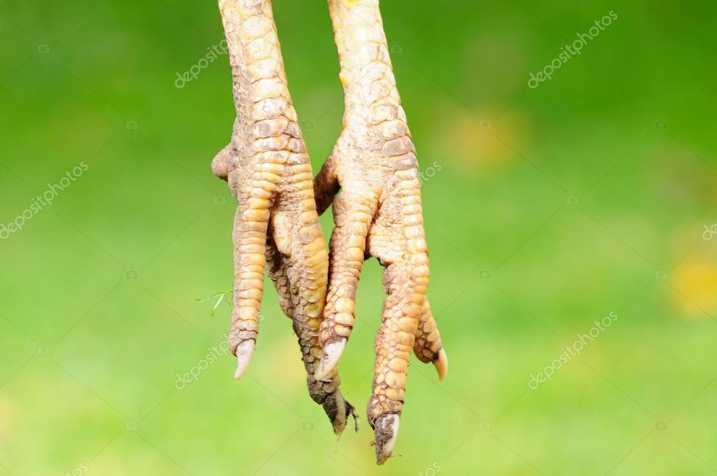 Chicken Feet (Paws)