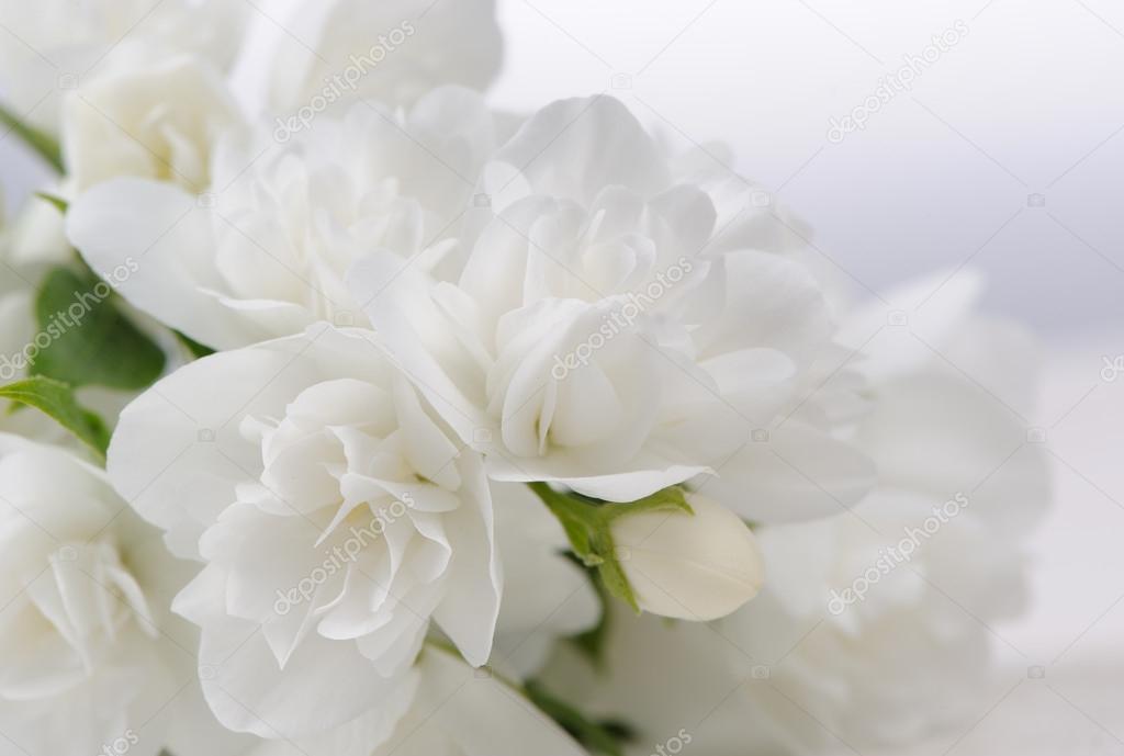 Белый красивый цветок фото