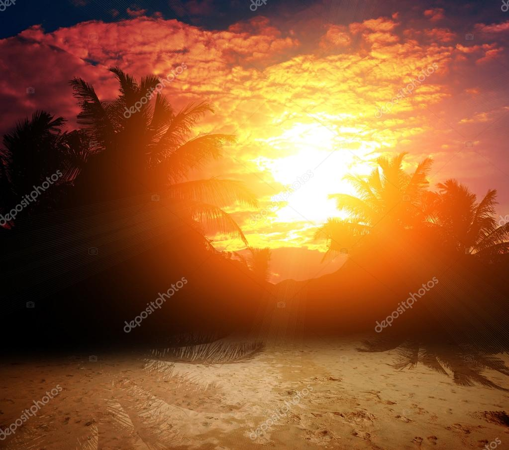 Tropic palms at the red sunset