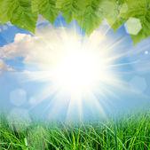 grüne Natur Hintergrund