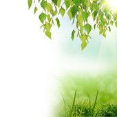 zelený natute pozadí