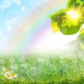 zelené letní přírodní pozadí