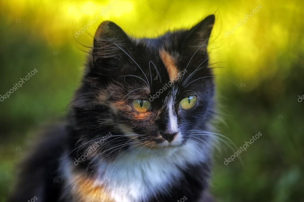 Beautiful cat Portrait