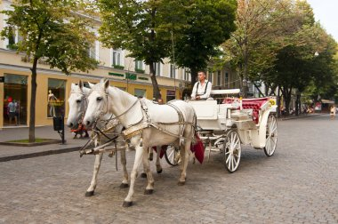 Horse carriage on a street