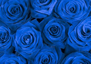 Blue roses background stock vector