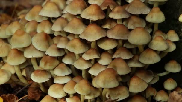 Sárga gombát közelről