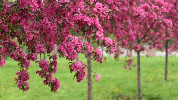 Kvetoucí stromy v sadu