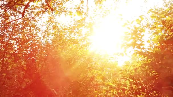 strom na západ slunce paprsky