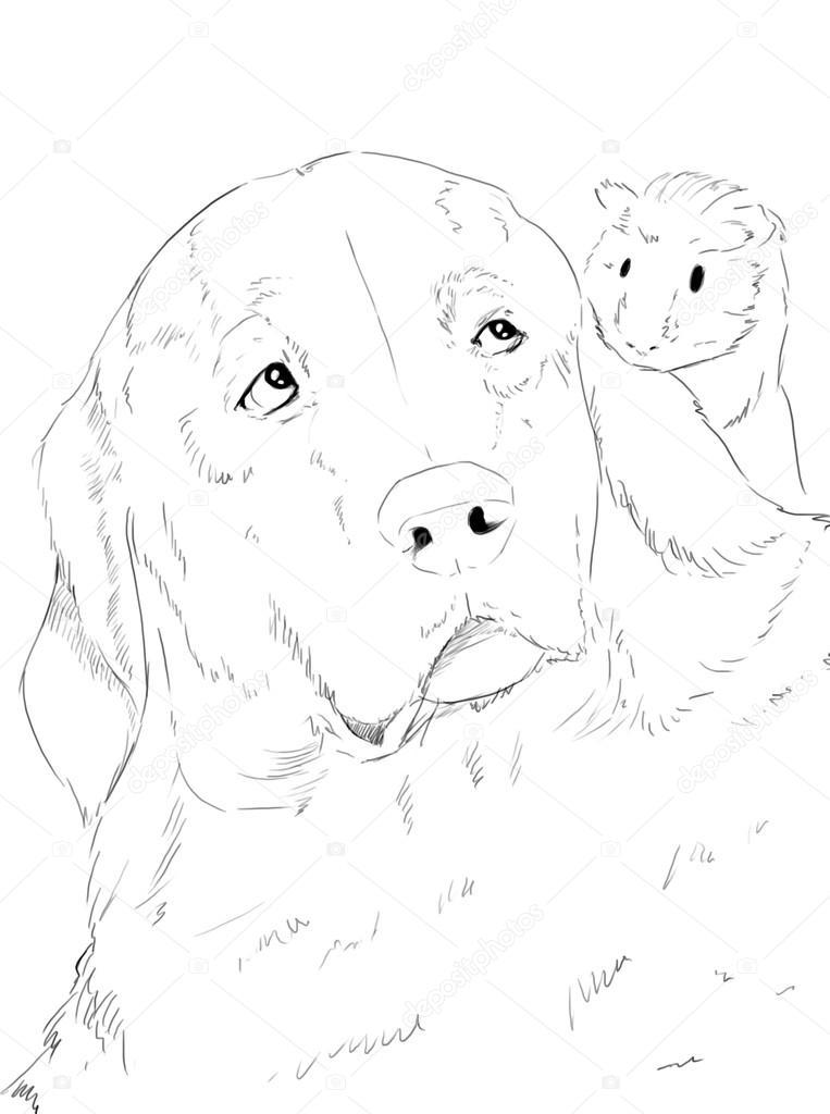 Labrador y conejillo de Indias sentados juntos — Fotos de Stock ...