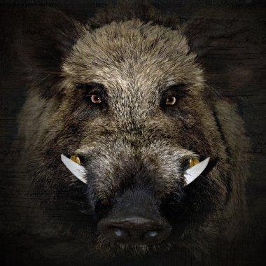 boar portrait