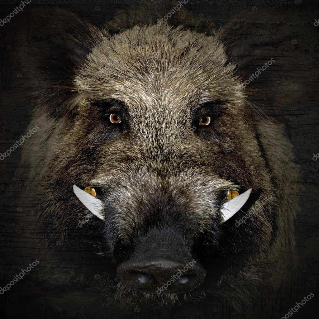 boar portrait