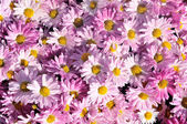 Fotografie flower background