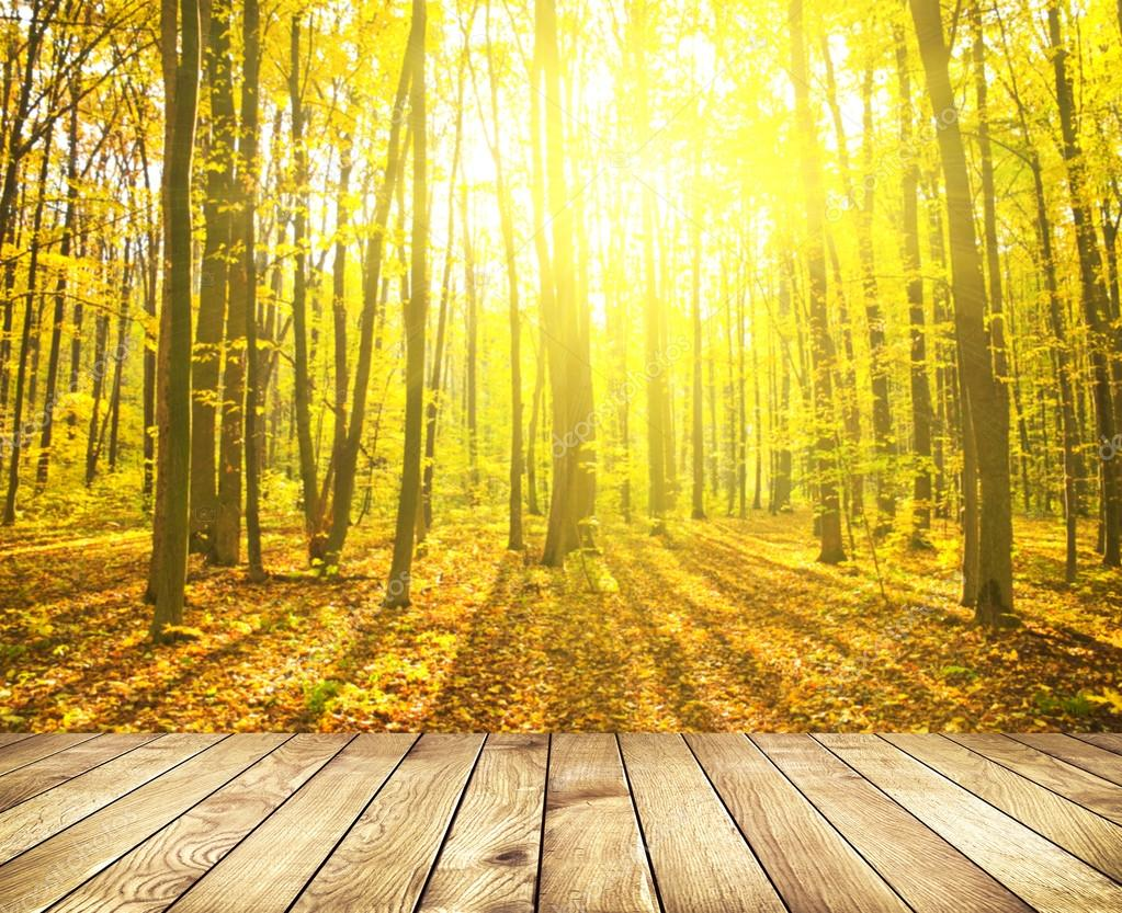 Beautiful sunlight in the autumn forest