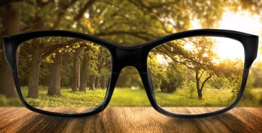 Clear forest in glasses on the background of blurred forest stock vector