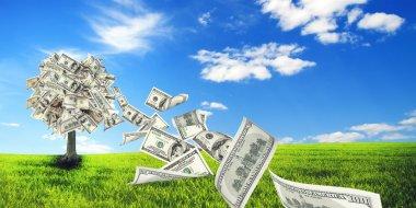 Money tree in meadow