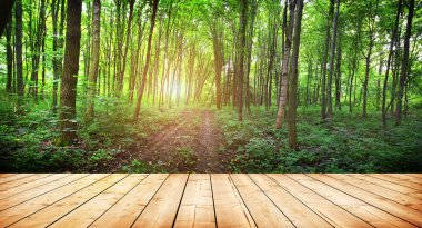 Wooden planks floor texture over morning forest trees stock vector