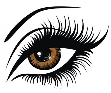 Vector illustration beautiful female brown eye