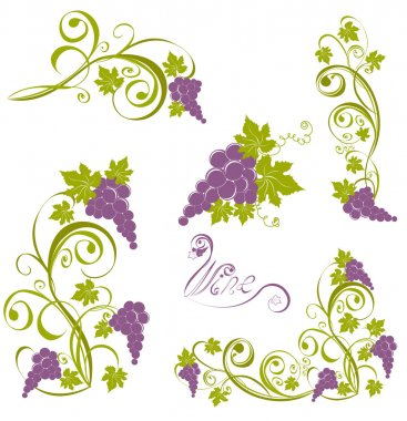 Grapevine. Wine design elements