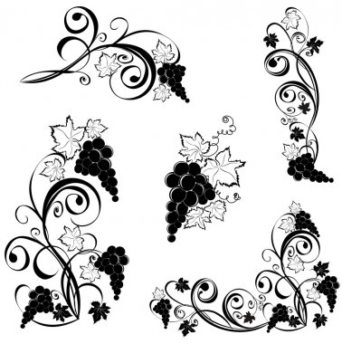 Grapevine. Wine design elements.