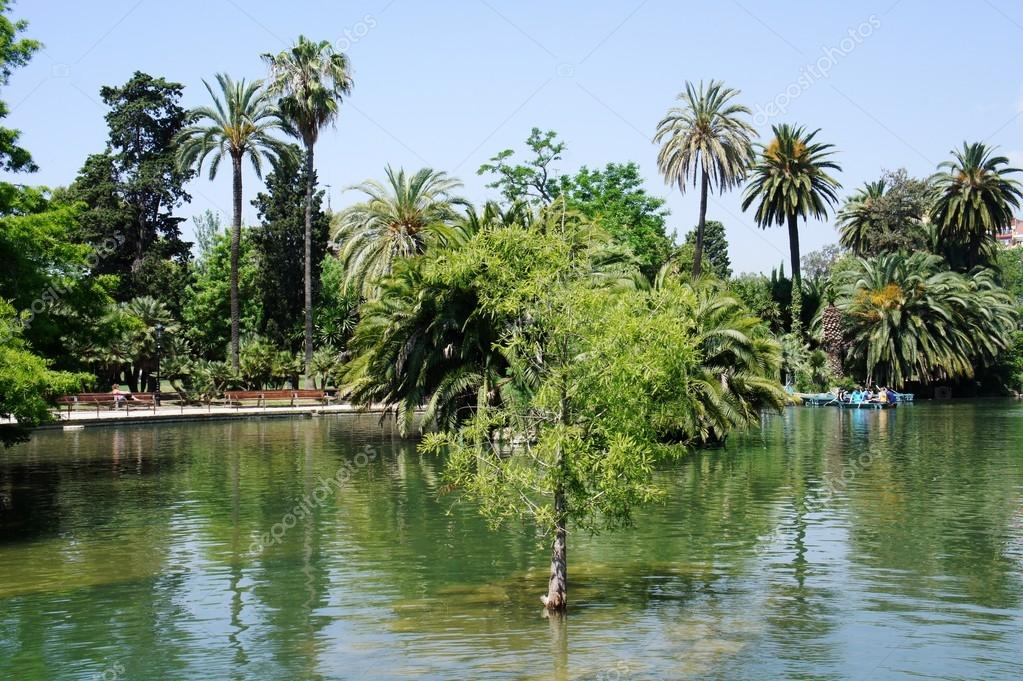 Tropical garden, lake and palms