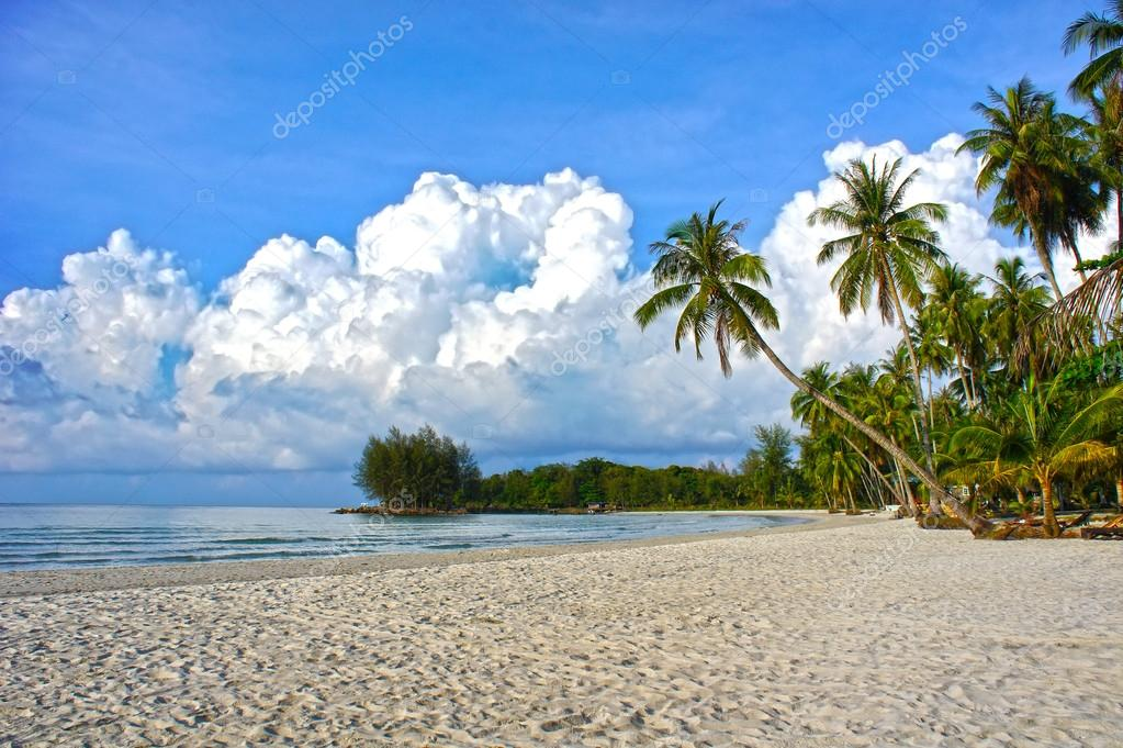 Tropical paradise nature, sea water, palm trees, summer on the tropical beach.
