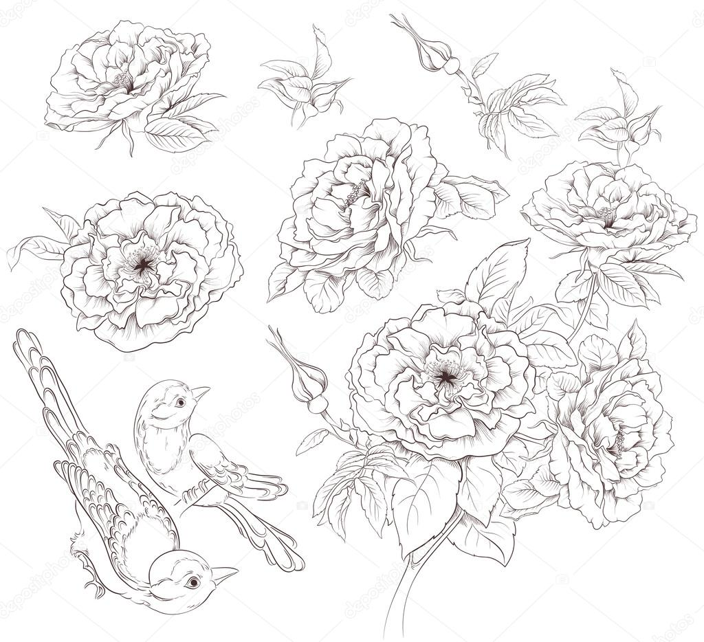 Flower set. Vintage collection of hand drawn roses and birds isolated on white background