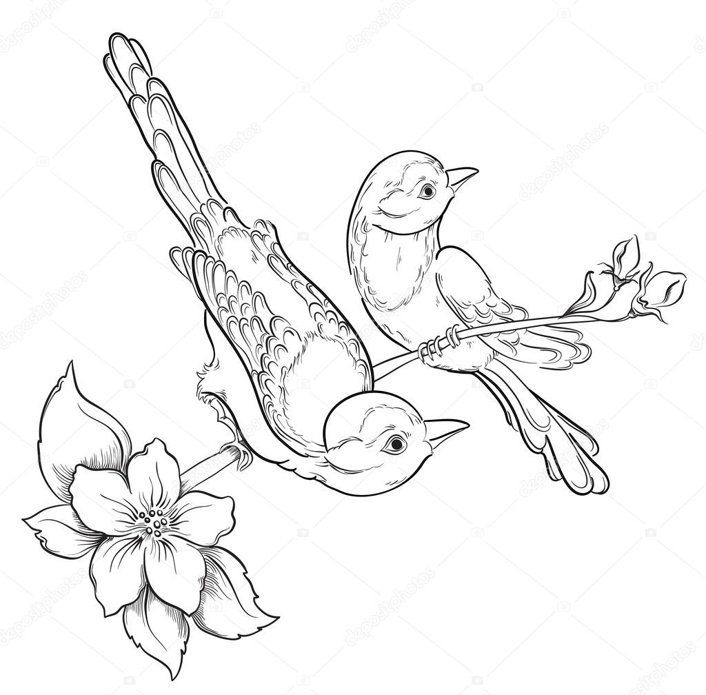 Two birds sitting on blooming cherry tree. Vector illustration.
