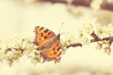 """Картина, постер, плакат, фотообои """"butterfly"""", артикул 23863623"""