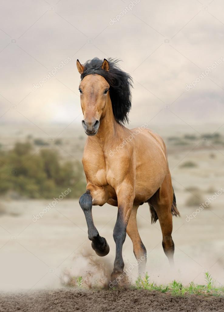 Ver fotos de cavalos selvagem 6