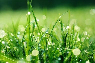 Fresh green grass with water drops on it