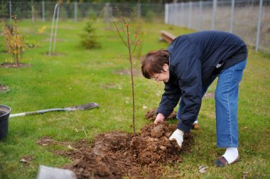 A woman planting a tree
