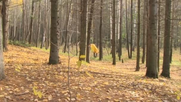 podzimní listí na pozadí přírody