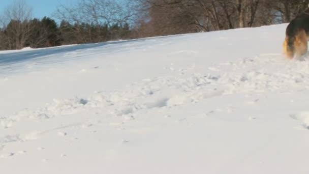 cane nel paese invernale